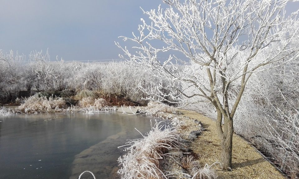 winter-teich