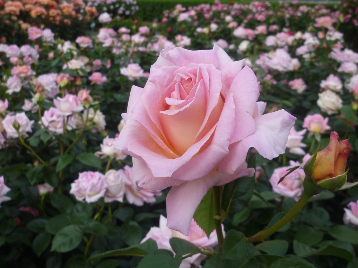 Blühende Politik im Hintergarten