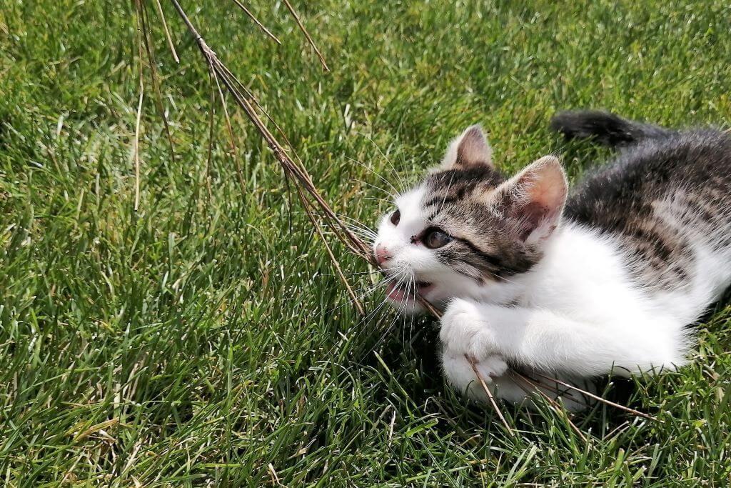 Rasen-Katze2.0